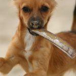 Fiffi Fit | Hundephysiotherapie Düsseldorf