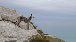 Fiffi-Fit Osteopathie Hunde