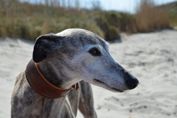Osteopathie Hund