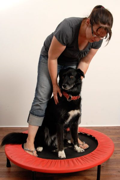Fiffi Fit | Hundephysiotherapie & Osteopathie